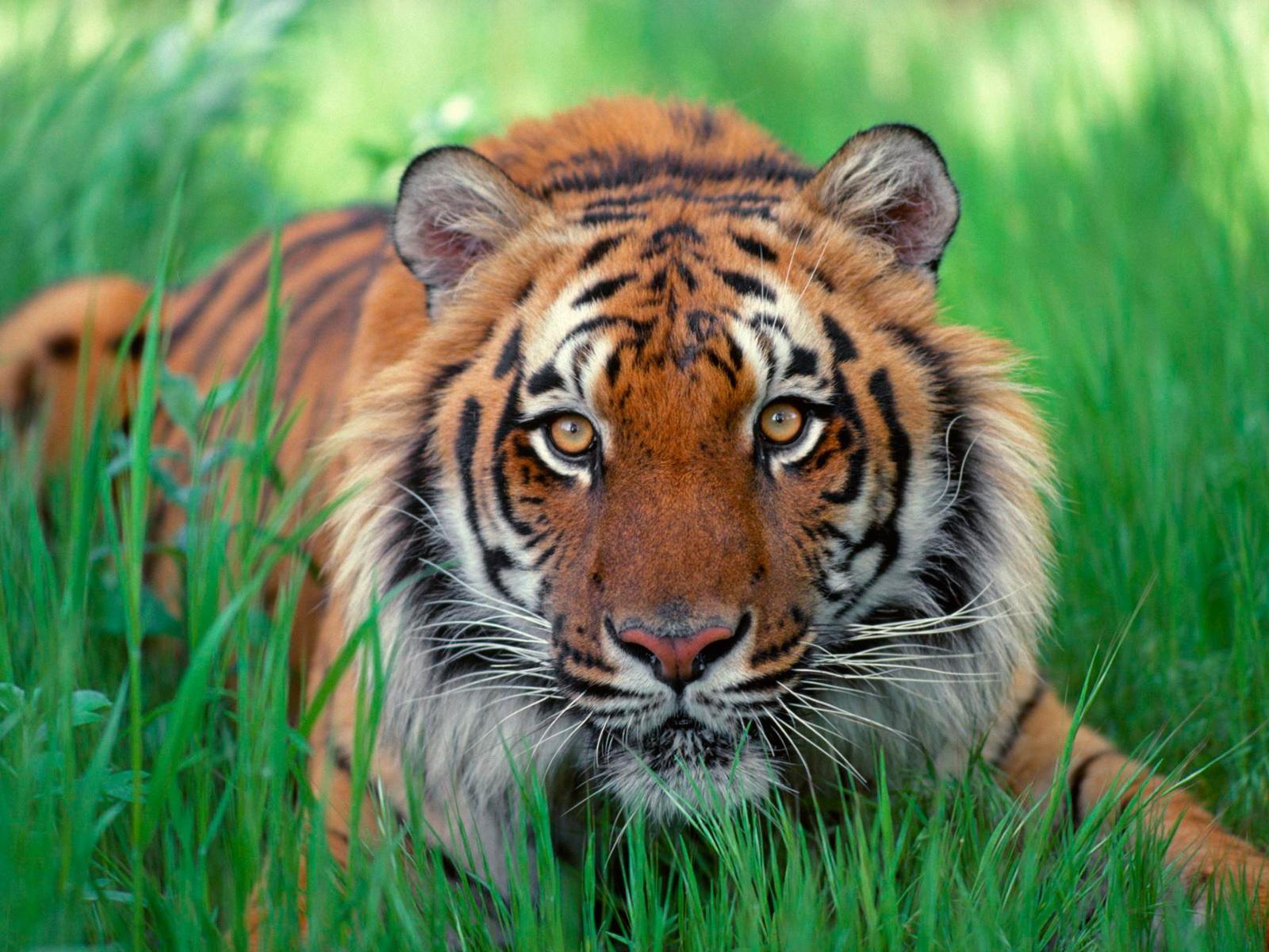 Malaysians pride pbf blog im kindda endangered biocorpaavc